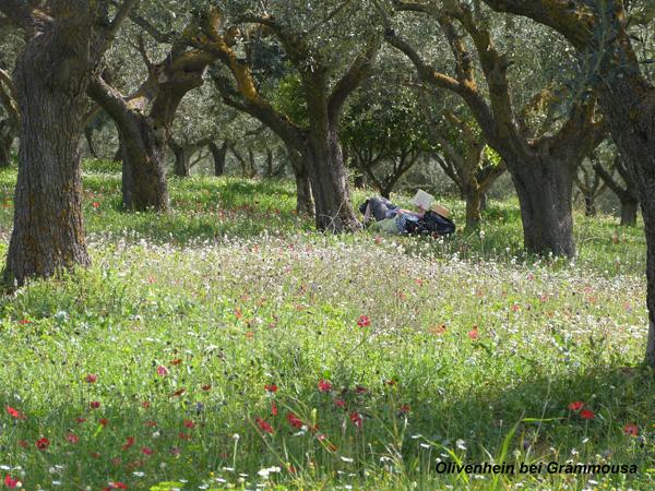 Blumenwiese bei Grammousa